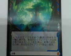霧深い雨林|MTG